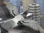 Online Şehir Güvercinleri Oyunu