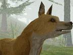Online Vahşi Hayvanlar Oyunu